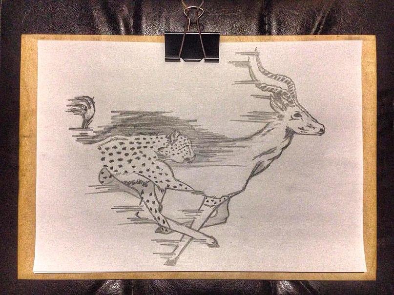 Рисунок животных в действии